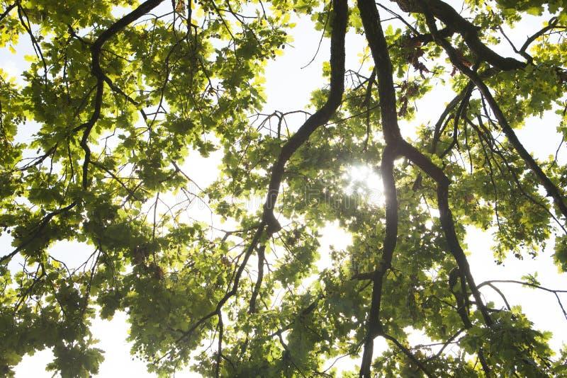 Mooie aard bij ochtend in nevelig de lentebos stock foto