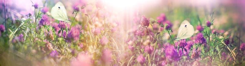 Mooie aard in de lente - witte vlinders op bloeiende klaver royalty-vrije stock afbeeldingen