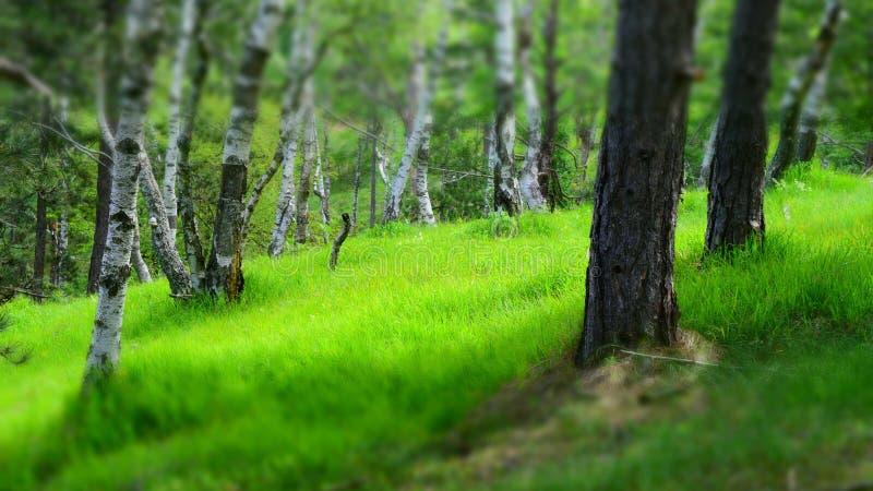 Mooie aard Trillende kleuren van gras in de lente royalty-vrije stock afbeelding