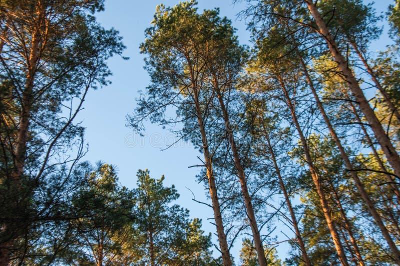 Mooie aard van Rusland bossen van Rusland Behandel aard 2 stock foto
