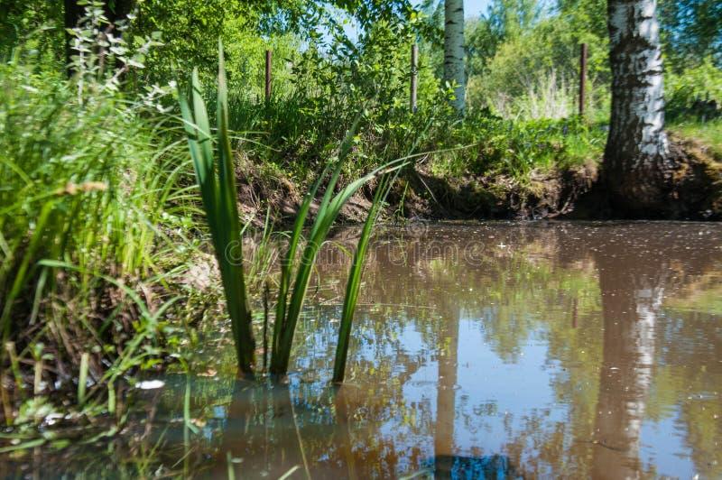 Mooie aard van Rusland bossen van Rusland Behandel aard 2 royalty-vrije stock afbeeldingen