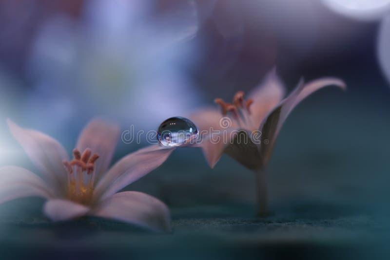Mooie aardachtergrond Abstract Artistiek Behang Art Macro Photography enkel Geregend Sluit omhoog geschoten Verbazende Bloemenfot stock foto's