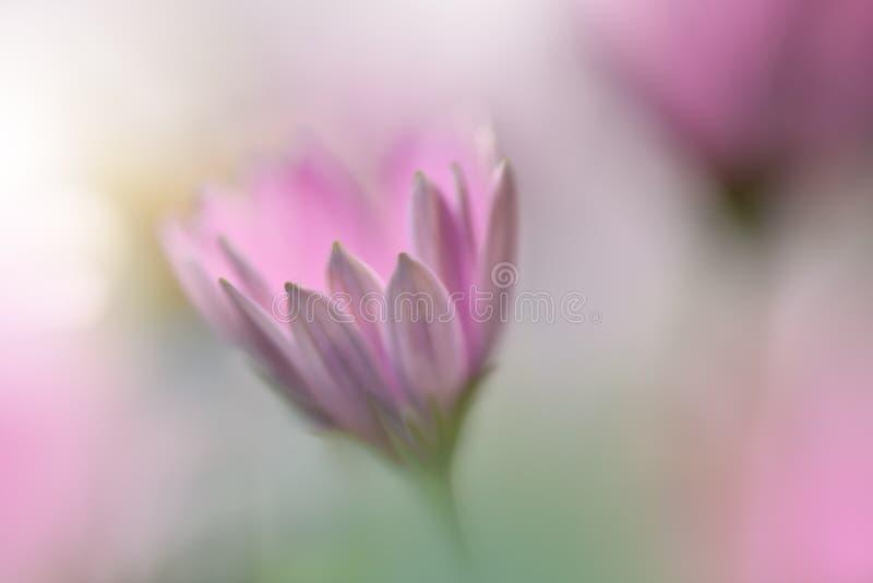 Mooie aardachtergrond Abstract Artistiek Behang Art Macro Photography enkel Geregend Sluit omhoog geschoten Zuivere installatie,  stock afbeeldingen