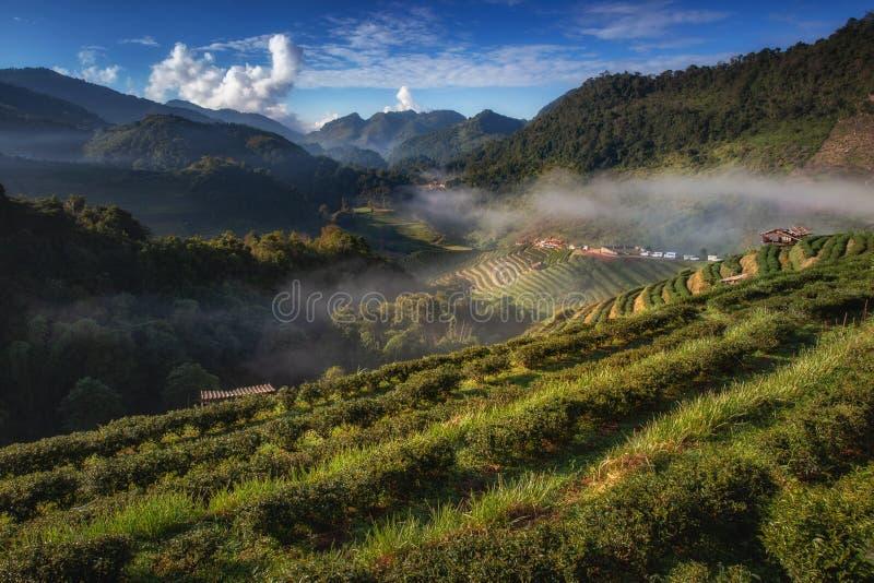 Mooie aardbeituin en zonsopgang op Doi Ang Khang, Chiang Mai royalty-vrije stock foto's