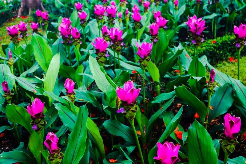 Mooie abstracte kleuren rode en roze bloemen in de openbare tuinparken stock foto's