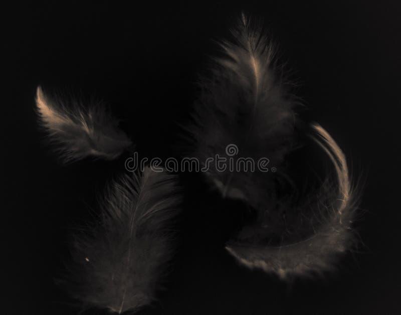 Mooie abstracte kleuren witte grijze en lichtrose veren op zwart patroon en behang als achtergrond royalty-vrije stock foto