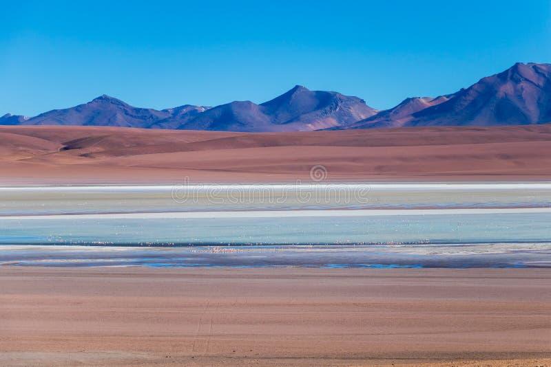 Mooie achtergrond met Altiplanic-Lagune, een ondiep zout meer en een blauwe hemel stock fotografie