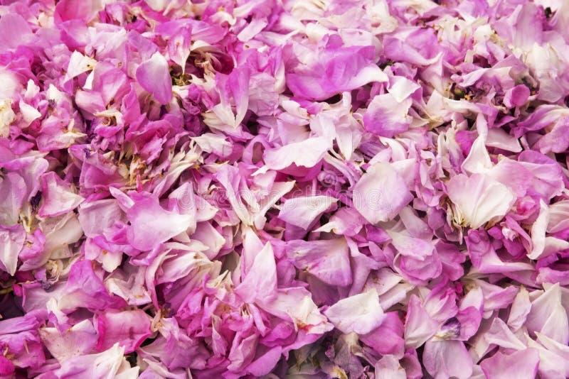 Mooie achtergrond met roze bloemblaadjes stock fotografie