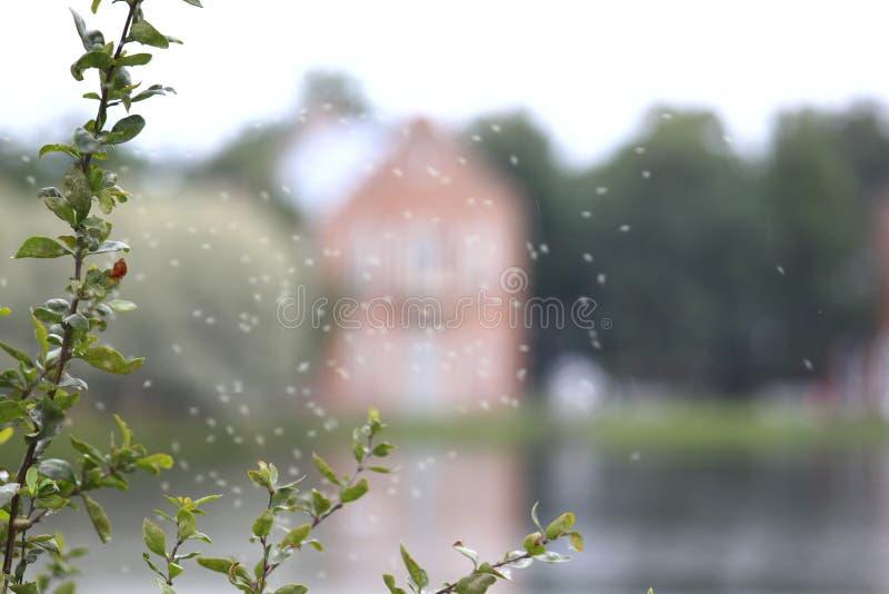 Mooie achtergrond van Groene tak en vaag landschapshuis op het meer stock foto's