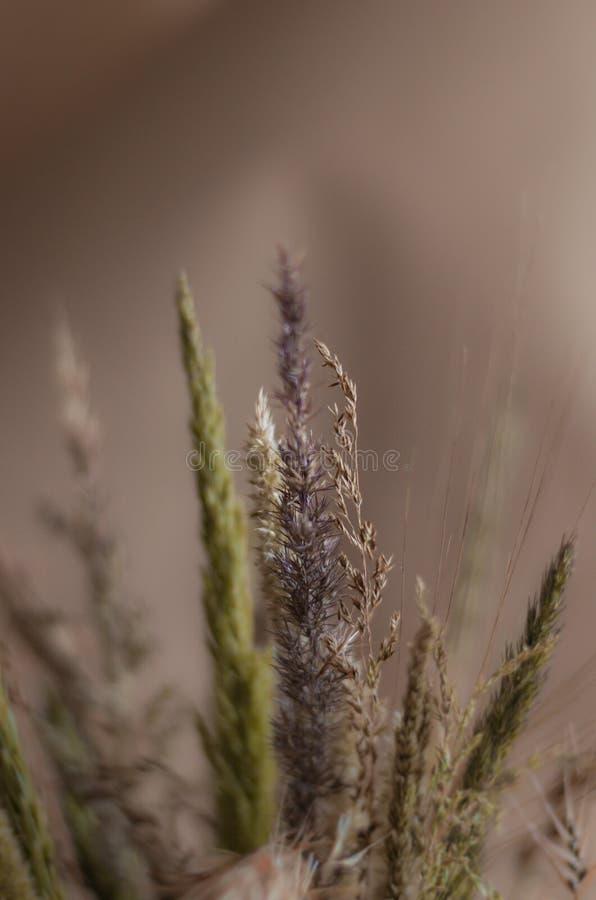 Mooie achtergrond in warme gedempte tonen van wilde droge kruiden Selectieve nadruk groot stock foto's