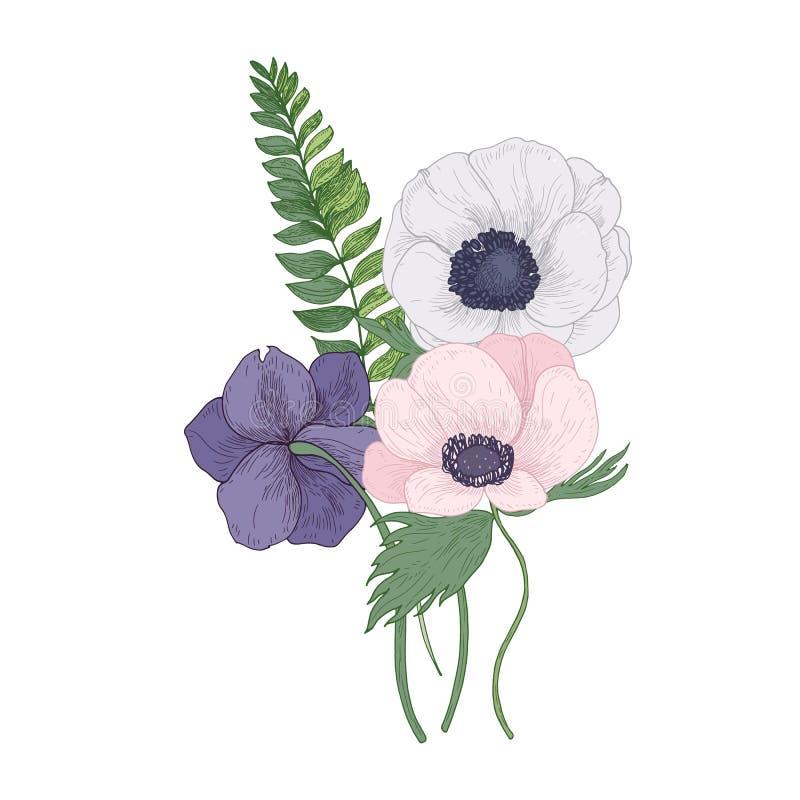 Mooie Anemoon tot bloei komende die bloemen en bladeren op witte achtergrond worden geïsoleerd Gedetailleerde tekening van schitt royalty-vrije illustratie