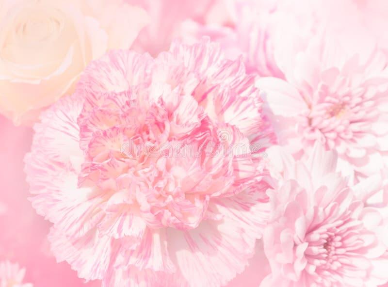 Mooie anjerbloem in zachte en onduidelijk beeldstijl stock fotografie