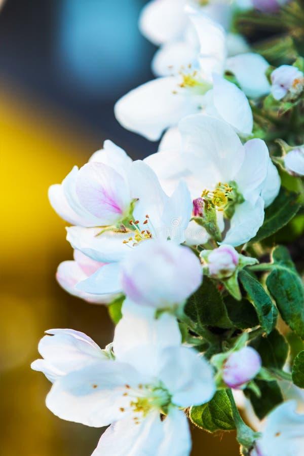 Mooie Apple-boomtak met bloemen en bladeren stock foto