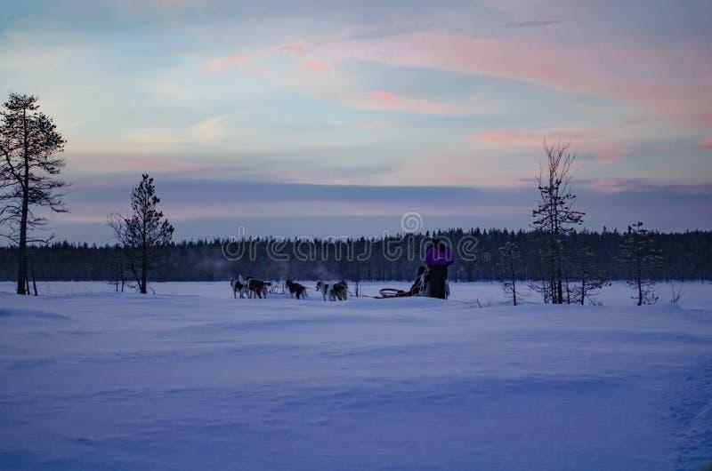 Mooie avondhemel in een schor slee Finland stock afbeelding