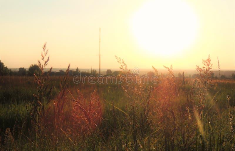 Mooie avondzonsondergang op het grasrijke landschap stock afbeelding