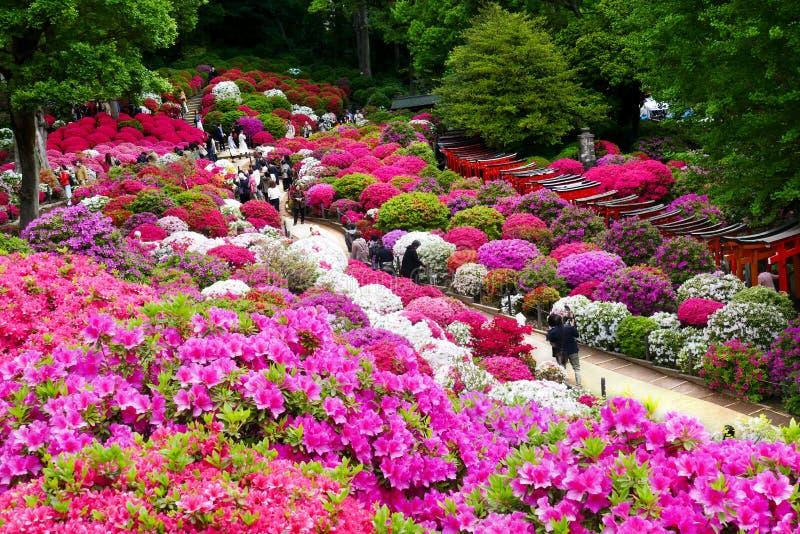 Mooie Azaleabloemen bij Nezu-Heiligdom, Tokyo stock foto's