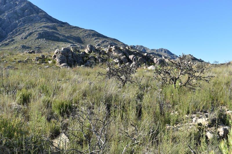Mooie bergachtige aard bij de Swartberg-Pas in Oudtshoorn in Zuid-Afrika royalty-vrije stock foto