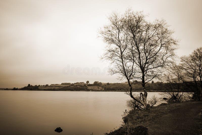 Mooie berkbomen door het meer stock afbeelding