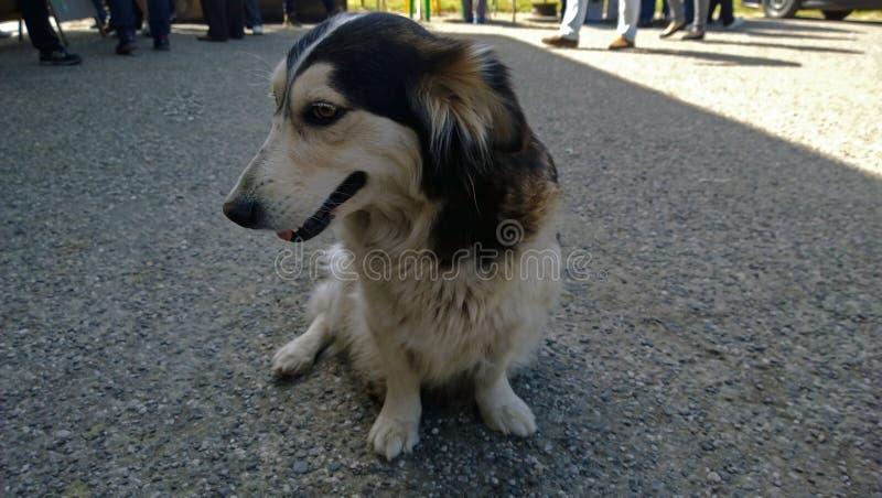 Mooie bescheiden weinig verdwaalde hond in Abchazië zit op de bestrating royalty-vrije stock foto's