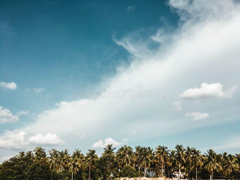 Mooie bewolkte hemel met exotische bomen stock afbeeldingen