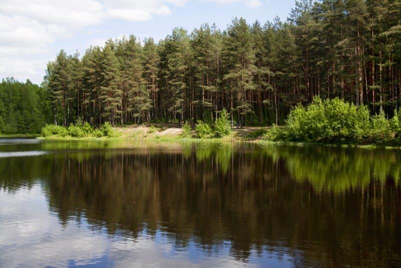 Mooie bezinning van bomen in de vijver royalty-vrije stock fotografie