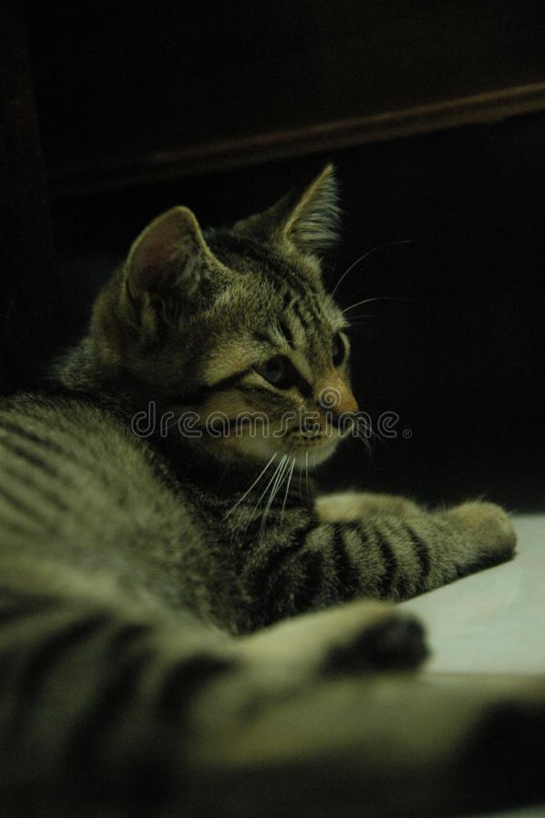 Mooie binnenlandse zo leuke kat - aanbiddelijk dier royalty-vrije stock afbeelding