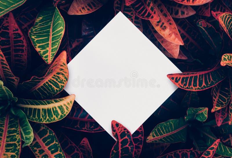 Mooie bladeren met witte exemplaar ruimteachtergrond in tuin aardconceptontwerp Voor presentatie royalty-vrije stock foto's