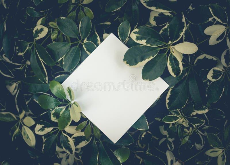 Mooie bladeren met witte exemplaar ruimteachtergrond in tuin aardconceptontwerp Voor presentatie royalty-vrije stock foto