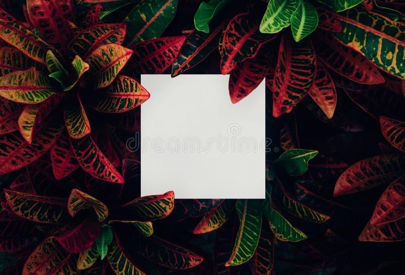 Mooie bladeren met witte exemplaar ruimteachtergrond in tuin aardconceptontwerp Voor presentatie stock afbeeldingen