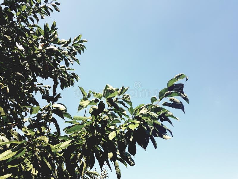 Mooie bladeren op een boom en een blauwe hemelachtergrond royalty-vrije stock foto's