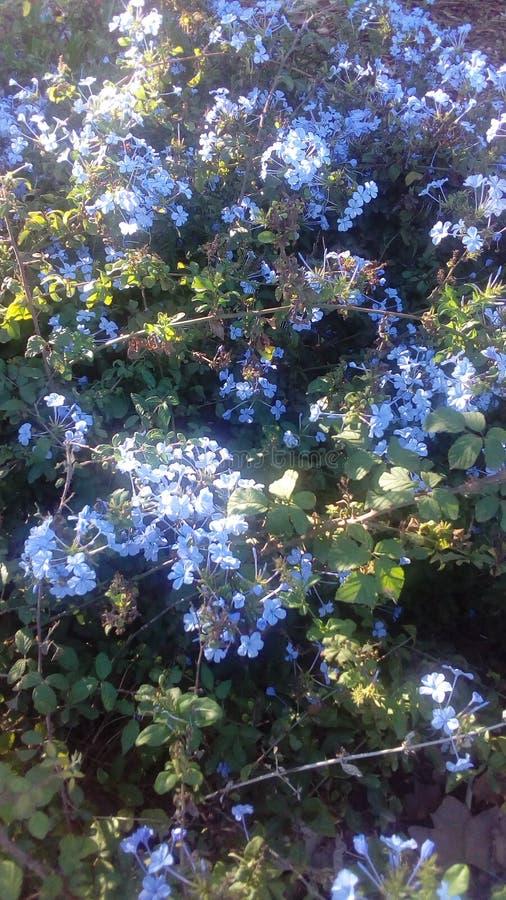 Mooie blauwe bloemen royalty-vrije stock afbeeldingen