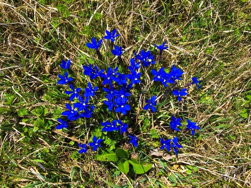 Mooie blauwe bloemen in Spanje dichtbij Frankrijk stock fotografie