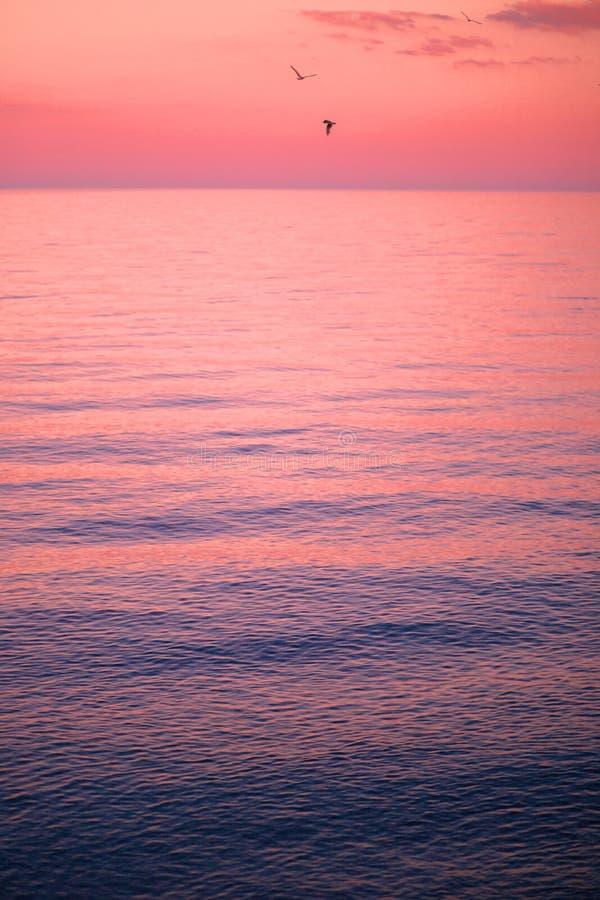 Mooie blauwe overzees bij roze zonsondergang met zeemeeuwen royalty-vrije stock foto's
