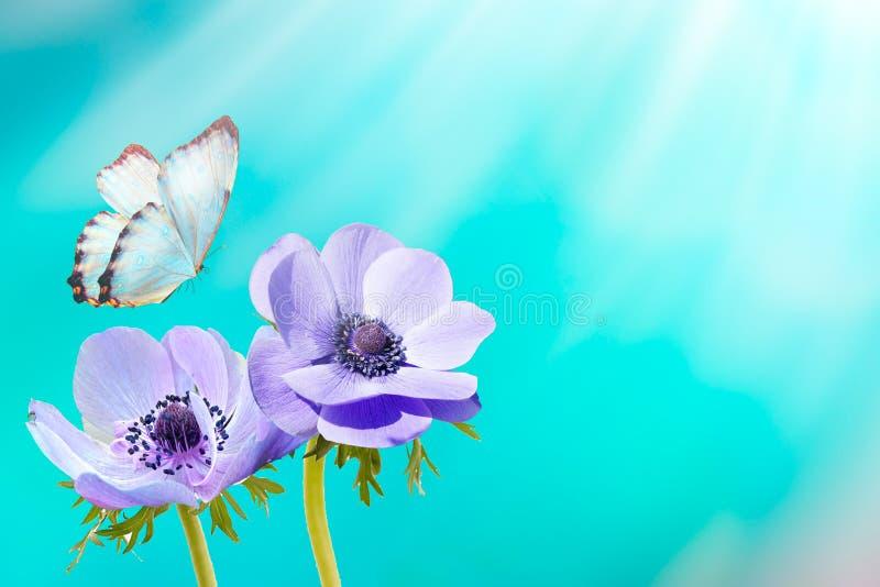 Mooie blauwe verse de lenteochtend van bloemanemonen op aard en fladderende vlinder op zachte zonlichtachtergrond, macro De lente royalty-vrije stock afbeeldingen