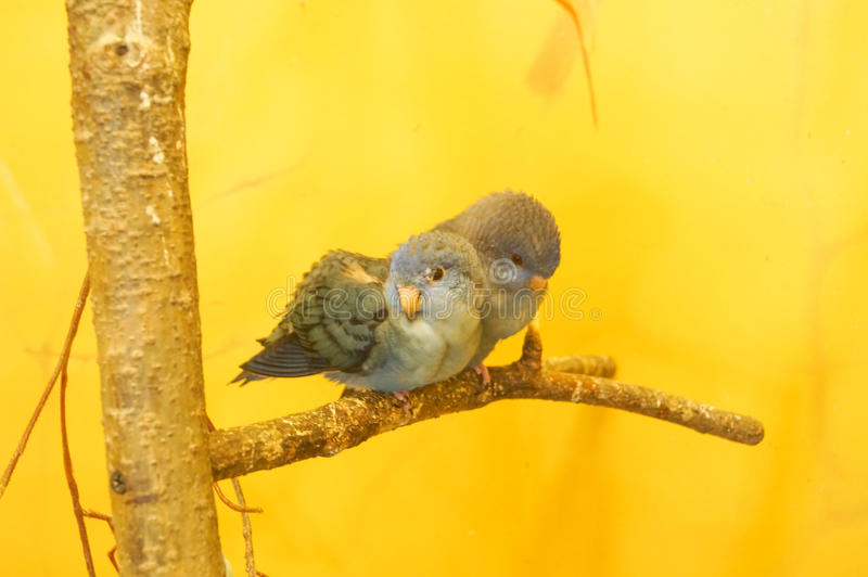 Mooie blauwe vogel stock foto's