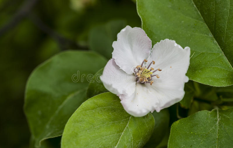 Mooie bloeiende appelbomen stock fotografie
