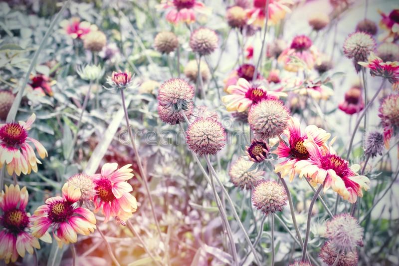 Mooie bloeiende bloemen in bloemtuin, gele die bloemen door zonlicht worden aangestoken royalty-vrije stock afbeeldingen