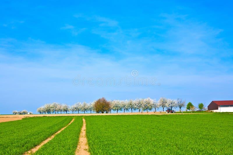 Mooie bloeiende bomen in steeg met gebied royalty-vrije stock foto