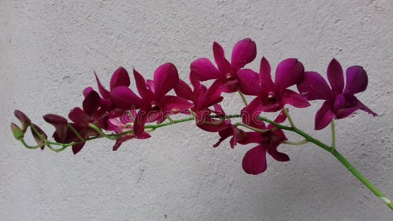 Mooie bloeiende orchidee stock foto's