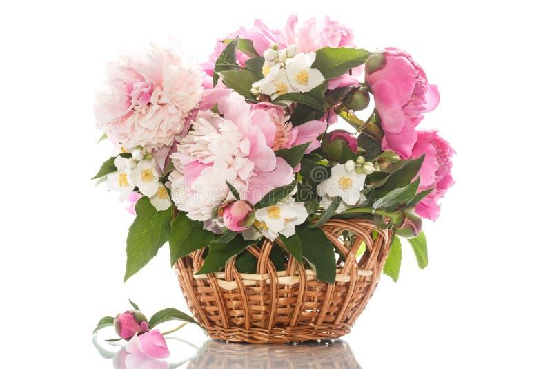 Mooie bloeiende pioenen stock afbeeldingen