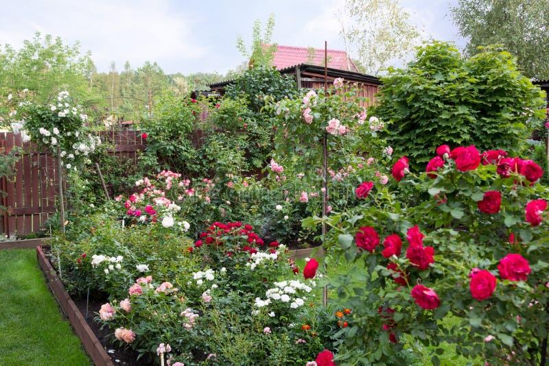Mooie bloeiende tuin in hoogte van de zomer stock afbeelding