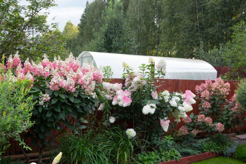 Mooie bloeiende tuin in hoogte van de zomer royalty-vrije stock afbeeldingen