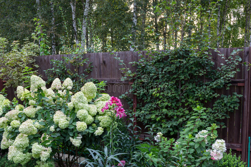 Mooie bloeiende tuin in hoogte van de zomer royalty-vrije stock fotografie