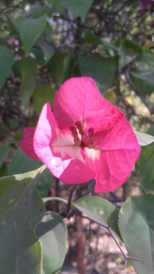 Mooie bloem royalty-vrije stock fotografie