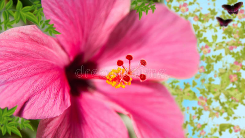 Mooie bloem royalty-vrije stock afbeeldingen