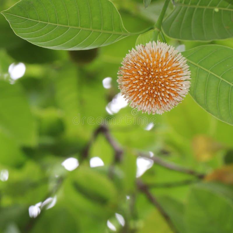 mooie bloem in aard royalty-vrije stock afbeelding