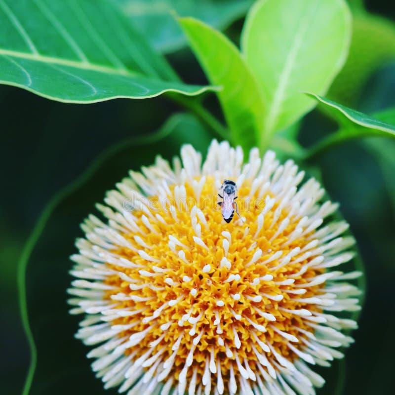 mooie bloem in aard royalty-vrije stock foto's