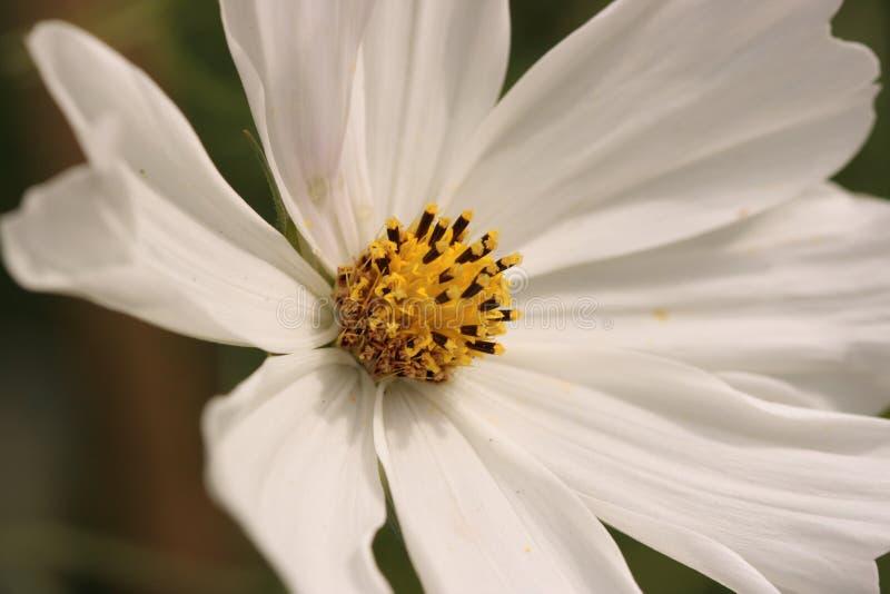 Mooie bloem bij de Botanische Tuin stock foto