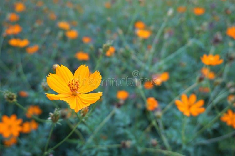 Mooie bloem in de tuin stock foto's