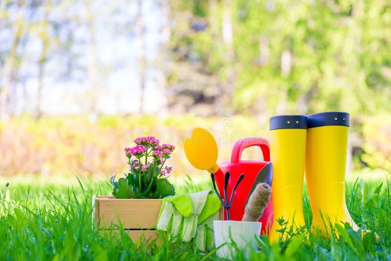 Mooie bloem in een houten doos voor het planten in de tuin, de gieter en de gele rubberlaarzenclose-up stock fotografie